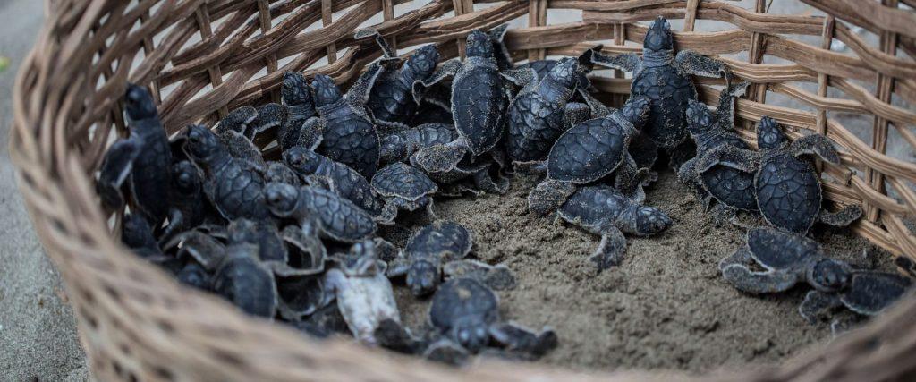 sea turtles nicaragua
