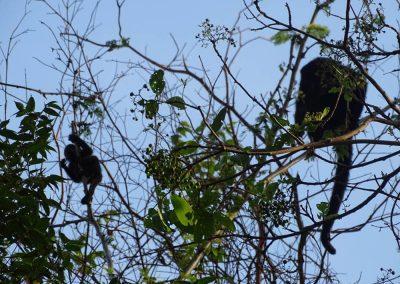 nicaraguan nature