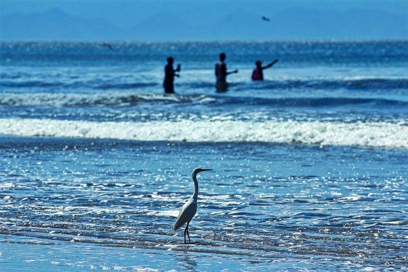 bird in the ocean