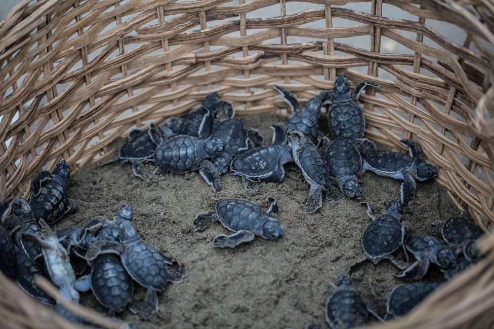 ecolodge sea turtles
