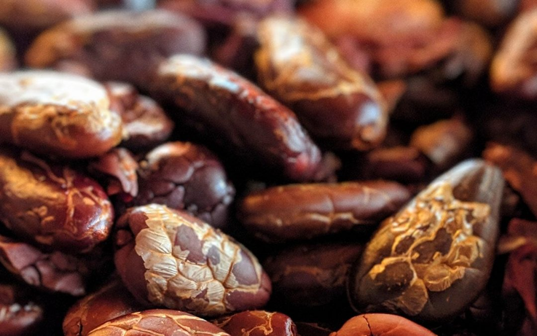 Facts about the superfood cacao